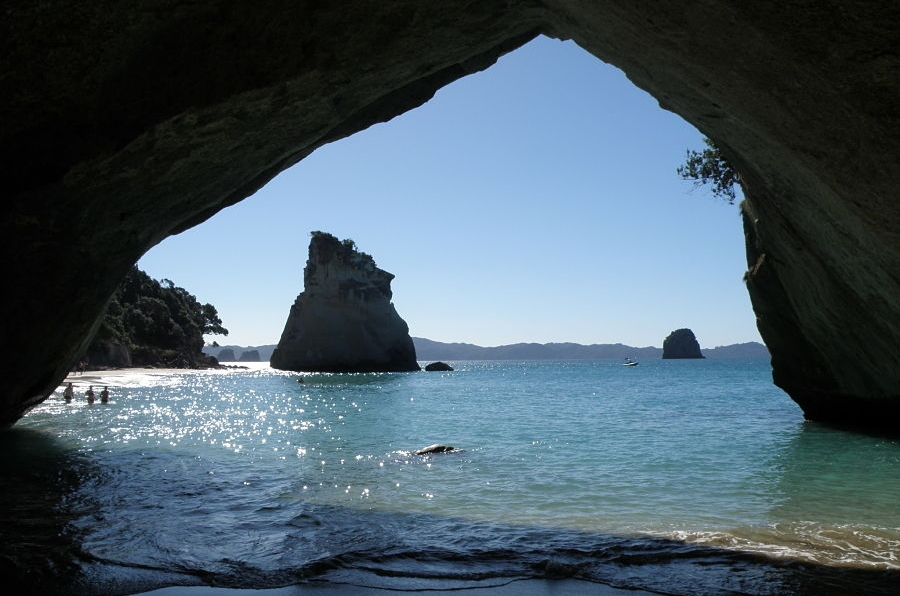 Cathedral Cove Hot Water Beach Kauri Trees And More
